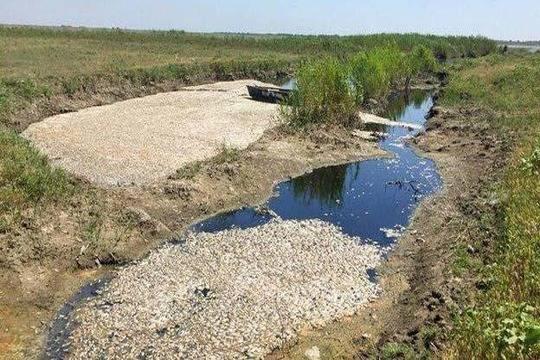 «Дагводсервис» погубил 7,5 млн. рыбы