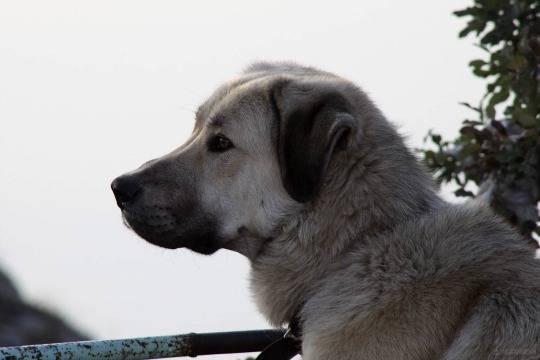 После нападения собак надевочку вМахачкале откроют приют для животных